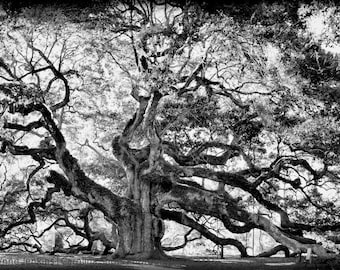 Angel Oak Tree in Black and White - Giclee' Print on Watercolor Paper