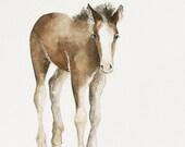 horse nursery art print horse nursery decor cowboy room decor western room decor nursery art horse animal watercolor painting colt 11x14