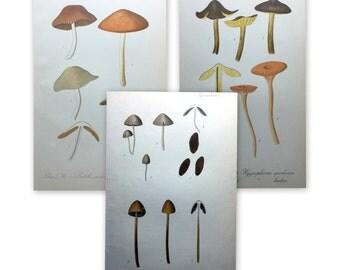 1912 Antique Mushroom Prints - Set of 3 Prints - Set No. 3