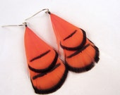 nectarine Feather earrings  Lady Amherst