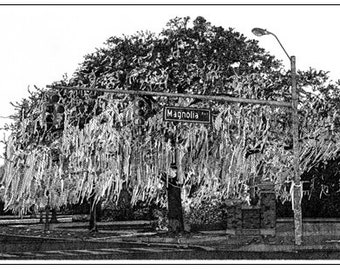 Rolled Auburn Oak Note Cards Stationery Reproduction Pen and Ink Drawing