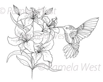 Digistamp Instant Download. Hummingbird and Lilies  Digital stamp. colouring page