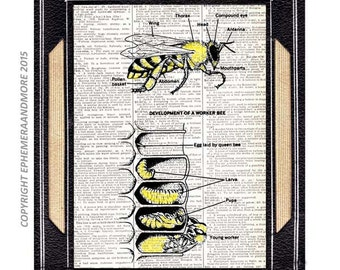 HONEY BEE development art print Entomology Animal Zoology Bee Anatomy on upcycled vintage dictionary book page black white wall decor 8x10