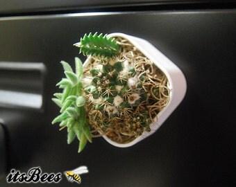 "Mini Cactus Garden Magnet - 2"" Magnetic Fairy Garden - Office, Room, School, Locker, Table, Dorm, Cubicle, Decor"