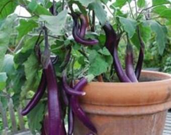 Organic Chinese Eggplant Seeds