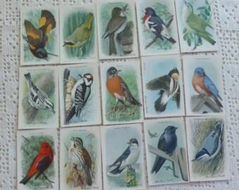 Vintage Cards Useful Birds of America Ninth Series 15 Cards