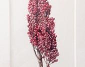 Original Botanical Watercolor on Paper of Sumac