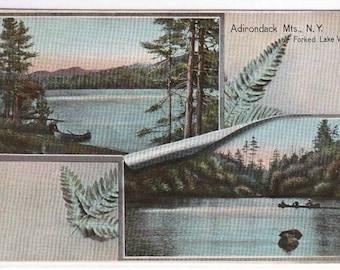 Forked Lake Views Adirondack Mountains New York 1916 postcard