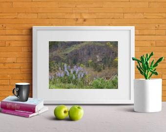 Oregon Wildflowers, Travel, Columbia River, Wall Art