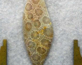 Agatized Fossil Coral (AGT2511)