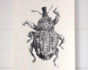 Original art, weevil beetle, charcoal drawing, wall art, woodland art, cabin decor,