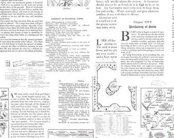 Desert Bloom Fabric Text in White by Amanda Herring - Half Yard