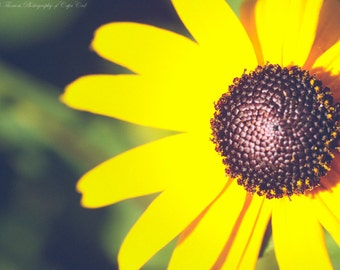 Yellow BLACK EYED SUSAN Flower Photography, Pick Your Size Print, Garden Art, Nature Print, Macro, Colorful, Yellow, Vibrant, Summer,