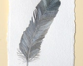 Feather painting original watercolour illustration part of a series