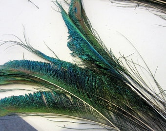 10 Peacock sword feathers peacock feathers craft feathers