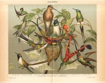 1894 Hummingbirds, White-tipped Sicklebill, Crimson Topaz, Cayenne Fairy, Tufted Coquette, Vervain Hummingbird Antique Lithograph
