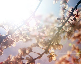 Pink, Easter, Spring, Pastel, Blue, Floral Photography, Floral, Nature Photography, Home Decor, Wall Decor