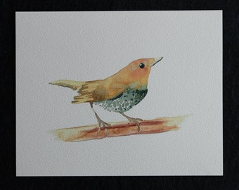 Spotted Bird Watercolor Print in Frame, bird art, bird watercolor, bird print, bird illustration