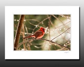 Cardinal Photo Matted Print, Bird Photography, Red, feathers, Cubicle and Dorm Wall Art, Small Gifts, Ready for Framing, Fits 5x7 inch Frame