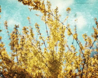 Yellow Flower Photography, Nature Photography, Golden Forsythia, Aqua Sky, Surreal Nature Art, Dreamy Nature Photograph, Blossom Bloom.
