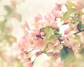 Apple Blossoms Floral Photography Flowers,pink,spring,springtime,soft dreamy decor,shabby chic,baby nursery decor,delicate wall decor,sweet
