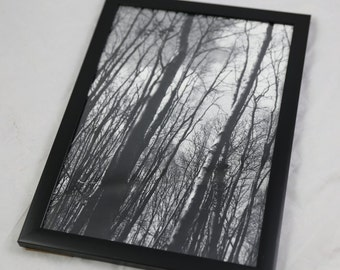 Framed print of 'In the woods' photo