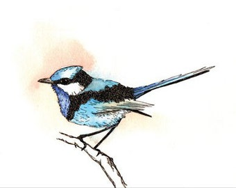 Blue Wren Card Hand Drawn Blank Bird Greeting Card