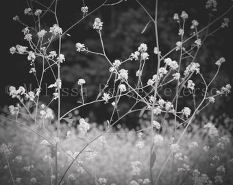 Weeds Whimsy, Nature Photography, Fine Art Prints, Flowers, Black & White, Floral Home Decor, Wildflowers Wall Art