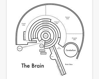 "Brain map 8x8"""