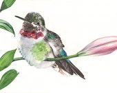 Hummingbird on Lily Branch print of watercolour painting HL7015 5 by 7 size small print- hummingbird watercolor painting by Louise De Masi