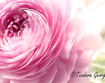 Ranunculus Photo Notecard