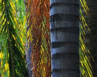 Palm tree with colored fronds, wall decor, home decor, tropical decor, colorful decor