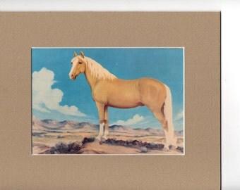 8 x 10 Matted Palomino Horse Equestrian Print Vintage Postcard Vern Parker