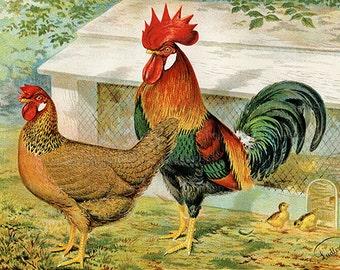 Vintage Rooster and Hen Brown Leghorn Chicken Printable Farm Animal Art Digital Download JPG Image