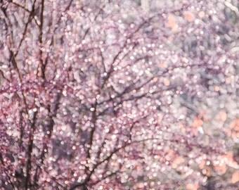 Pastel Pink Plum Purple Bokeh Lights, Sparkle Abstract Photography, Pastel Bokeh, Jewel Tones, Nursery Decor Large Wall Art, Fine Art Print