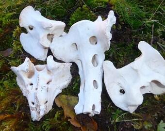 Goat Back Bones, 4 Piece Goat Bones Set