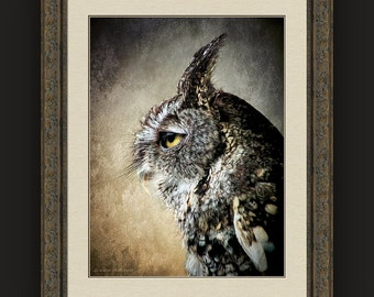 Dramatic Portrait Eastern Screech Owl, Bird of Prey, Wildlife, Nature, Birds, Rustic Woodland Decor, Fine Art Photography Print