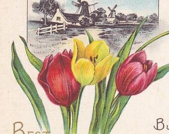 "Ca. 1908 ""Tulips & a Dutch Windmill Scene"" Best Wishes Friendship Greetings Postcard - 1559"