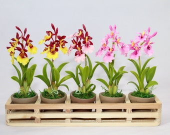 Mini Handmade Clay Lady Dance Orchids