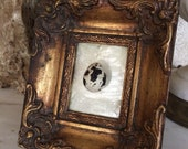 Vintage Framed Bird Egg Specimen Gilt Frame Bird Egg Real Bird Egg Quail Egg Specimen