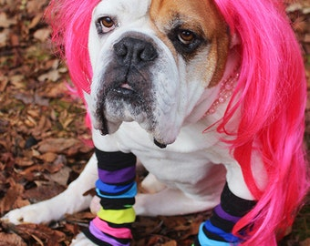 Funny DOG PHOTO, 80's Flashdance Bulldog Wearing Leg Warmers and a Wig, For A Good Cause, Silly Ogden The Bulldog