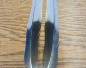 "Matched Pair Rosella Parrot 5 1/4"" Tail Feathers NJ40"