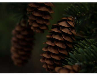 Pinecones in the Shade Macro Nature Photography