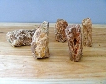 "Five Petrified Wood branches 2 - 3"" fossils gemstones gems rocks minerals"