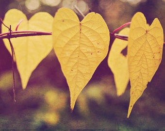 Yellow Leaves Photograph Fine Art Autumn Gold Fall Decor home decor