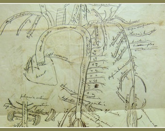 Civil War Confederate  1854 Diagram of Arterial System Hand Illustrated in 1854