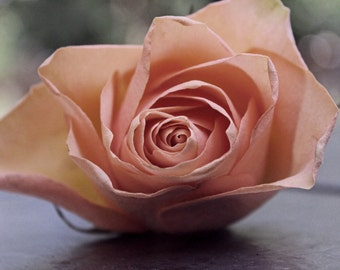 Dusty Peach -rose (FREE SHIPPING in the U.S.only)