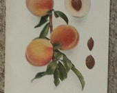 Vintage early 20th century Lithograph FAMILY FAVORITE PEACHES book illustration