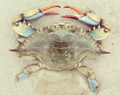 Crab - limited edition print of an original photograph