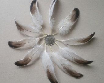 10  Unique Mallard Mix Duck Feathers